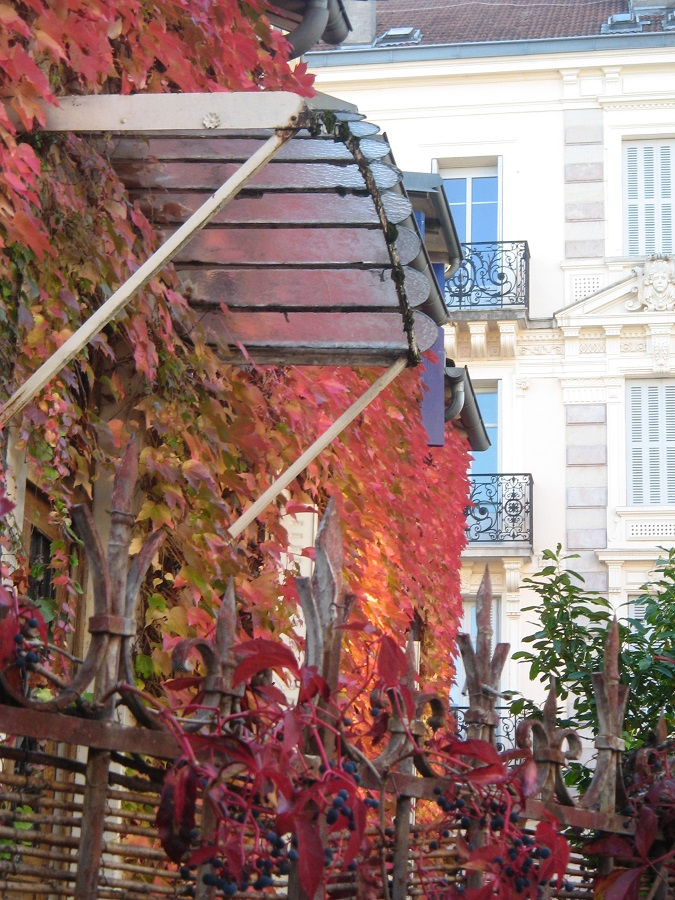 311017_Variations d'automne et le rouge vitn aux feuilles_IMG_7159