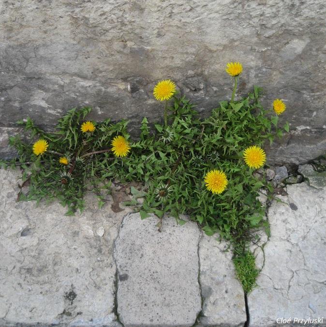 130318_si j'étais un élément de la nature, je serais l'herbe folle_IMG_7730